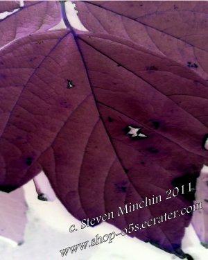 Negative Bloom #46