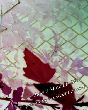 Negative Bloom #26