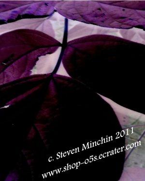 Negative Bloom #17