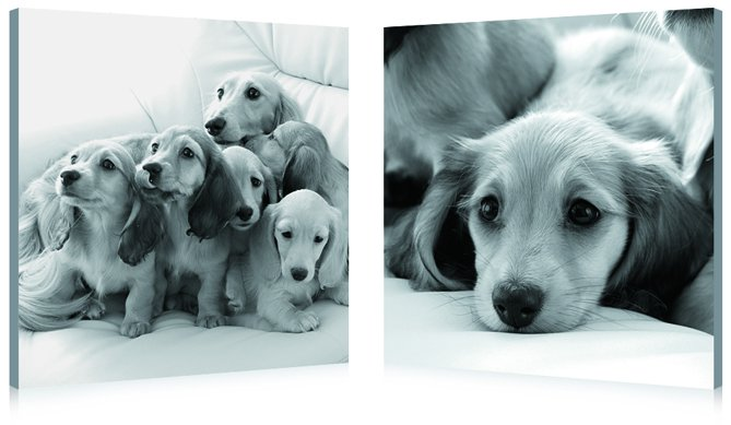 Puppies Love, Gallery Wrapped Diptychs 2 Panel Modern Wall Art Decoration #226