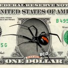 BLACK WIDOW Spider on REAL Dollar Bill Cash Money Bank Note Currency Dinero