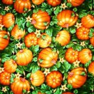Pumpkin field Fabric FQ