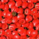 Cherry, cherries on black Cotton Fabric 1/2 yard