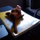 Ty Stuffed Animal Brown Bird