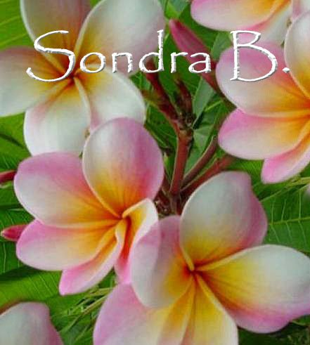 "Rare & Exotic *Sondra B.* Plumeria Rooted Live Plant 14""+"