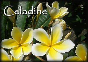 Rare & Exotic! PSA#191 Celadine Hawaiian Plumeria Frangipani + Pudica cuttings