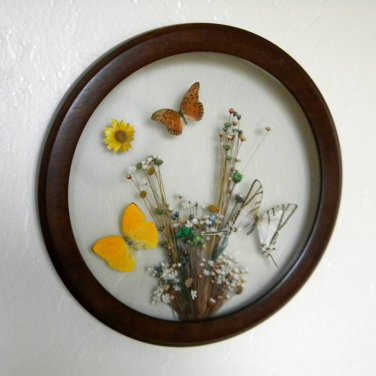 Beautiful Circular Wall Hanging Butterfly Display