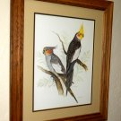 Beautiful Bird Print in Solid Oak Frame