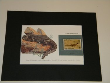 Matted Print and Stamp - Agama Lizard - World Wildlife Fund