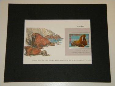 Matted Print and Stamp - Walrus - World Wildlife Fund