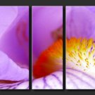 Modern oil painting on Canvas flower painting set 279