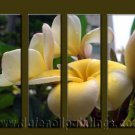 Modern Contemporary oil paintings on Canvas flower painting set10060
