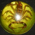 VINTAGE REAL SCORPION LUCITE DOME  ENCASED PAPERWEIGHT