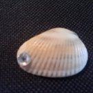 seashell pendant with clear rhinestone