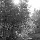 4x6 Photo ~ Black & White #004 Sun shining through the trees