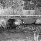 4x6 Photo ~ Black & White #002 Irrigation and Bridge