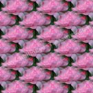 Tiled Pink Roses Floral Background Digital File