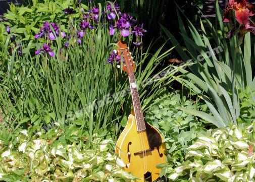 Mandolin In Flower Garden Digital Nature Photo 5x7