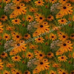 Black Eyed Susan Art Tiled Pattern Floral Background Digital File