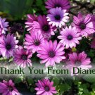 Purple African Daisies Flower Customized Printable Thank You