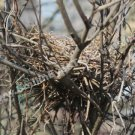 Abandoned Bird Nest Digital File Nature Photo 5x7