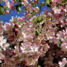 Pretty Pink Spring Blossoms Digital Flower Photo 5x7