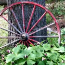 Red Wagon Wheel And Trillium Digital Nature Photo 5x7