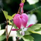 Single Pink Bleeding Heart Digital File Flower Photo 5x7