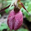 Deep Pink Lady Slipper Flower Digital File Photo 5x7