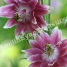 Pink Flower Pair Digital File Flower Photo 5x7