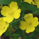 Yellow Flowers Digital File Flower Photo 5x7
