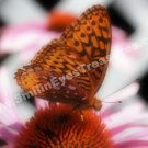 Macro Orange Butterfly On Flower Digital File Nature Photo 5x7