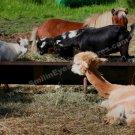 Barnyard Friends Digital Printable Farm Animal Photo 5x7