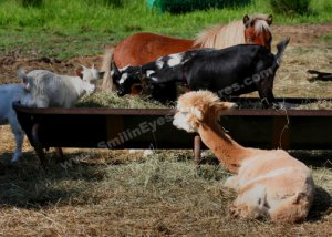 Barnyard Friends Digital Printable Farm Animal Photo 5x7