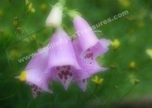 Pink Foxgloves Digital Printable Flower Photo 5x7