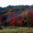Autumn Foliage Digital Printable Nature Photo 5x7