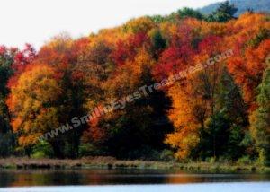 Autumn Foliage Pond Digital Printable Nature Photo 5x7