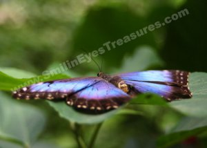Blue Butterfly Digital Printable Nature Photo 5x7