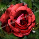 Abstract Red Rose Digital Printable Flower Photo 5x7