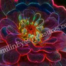 Electric Zinnia Digital Printable Flower Photo 5x7