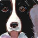 Border Collie Portait Tile