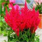 False Spiraea Red Astilbe Perennial Flower Seeds, Cold Hardy, 100 Seeds