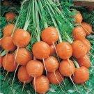 200pcs Super Giant Carrot Russian Heirloom Gardeb Var. 8
