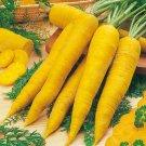 200pcs Super Giant Carrot Russian Heirloom Gardeb Var. 9
