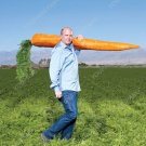 200pcs Super Giant Carrot Russian Heirloom Gardeb Var. 10