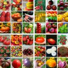 200pcs Mixed tomatoes seeded house garden vegetables fruit seed seeds