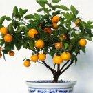 30pcs Edible Fruit Mandarin Citrus Orange Bonsai Tree Seeds