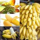 100 PCs Dwarf Banana Tree Seeds Mini Bonsai Seeds
