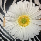 Fab Floral Vintage White Gerber Daisy Flower 4 inch Hair Bow Clip ~ Free Shipping