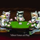 Silver Foxes at Play